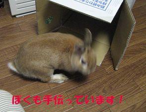 pig 20120519 001