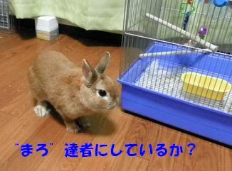 pig 20120523 001