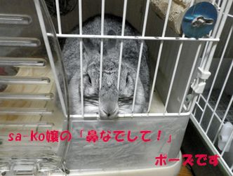 sa-ko 20120526 001