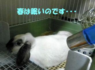 sakura 20120527 001