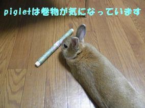 pig 20120608 001