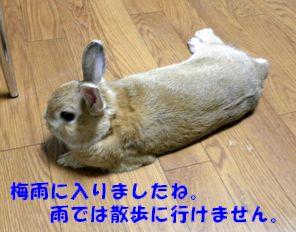 pig 20120610 001
