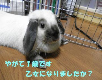 sakura 20120615 001