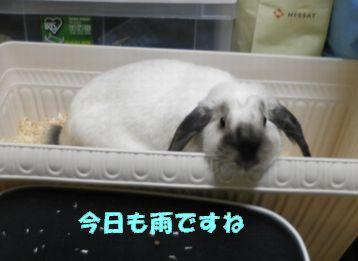 sakura 20120617 001