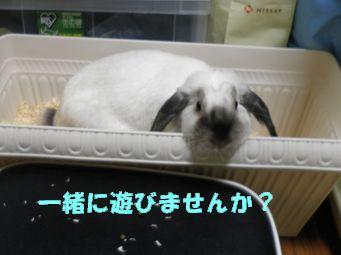 sakura 20120622 001
