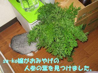 sa-ko 20120625 001