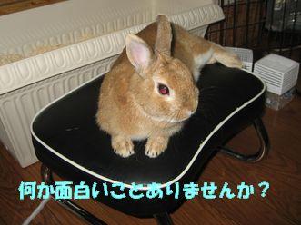 pig 20120629 001