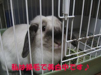 sakura 20120701 001