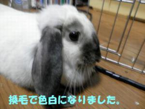 sakura 20120707 001