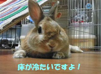 pig 20120725 001