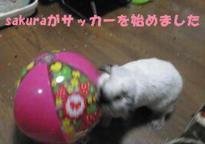 sakura 20120726 001