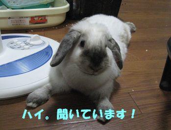 sakura 20120814 001