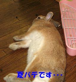 pig 20120823 001
