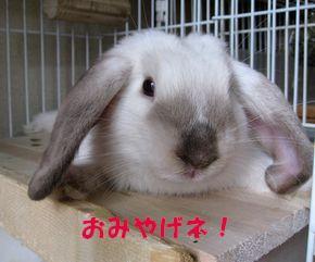 sakura 20120830 001