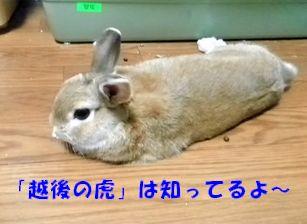 pig 20121011