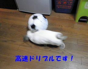 sakura 20121012 001