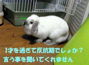 sakura 20121024
