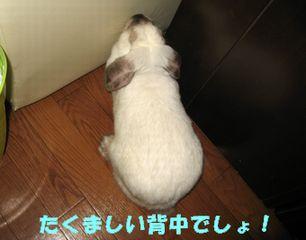 sakura 20121027