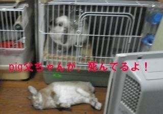 sakura 20121108