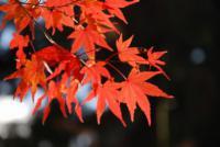 鍬山神社 002