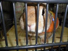 pig 20121124 005