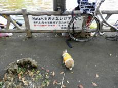 pig 20121124 010