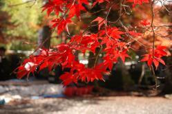 ku.鍬山神社 005