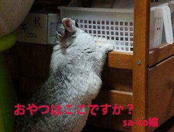 sa-ko 20121217 001