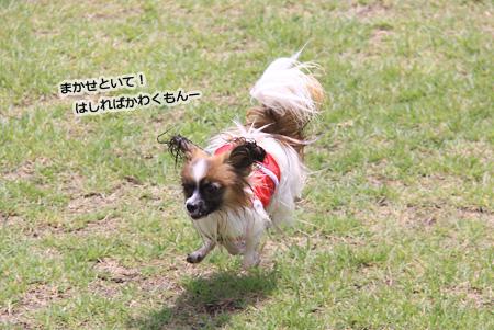 IMG_ma2612.jpg