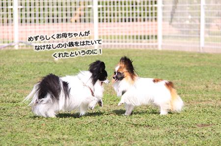 IMG_ma3640.jpg