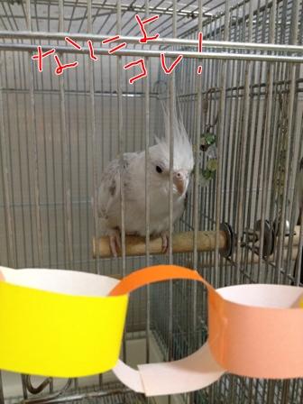 fc2blog_20121027220316e02.jpg