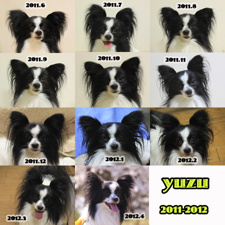yuzu11-12.jpg