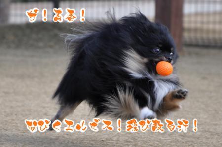 DSC_0023_convert_20120715075546.jpg