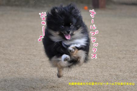 DSC_0061_convert_20120703084612.jpg