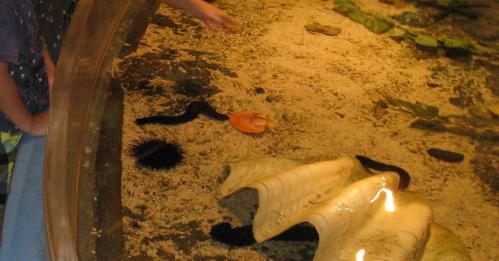 八島水族館 タッチプール