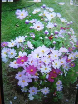 IMG_4463_convert_20141013115356.jpg
