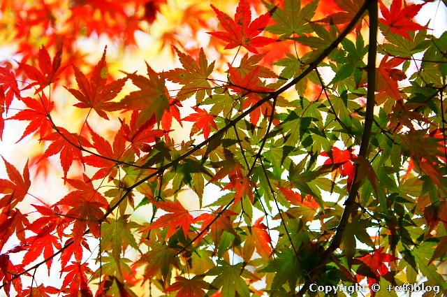 kawauchi11-12a_eip.jpg