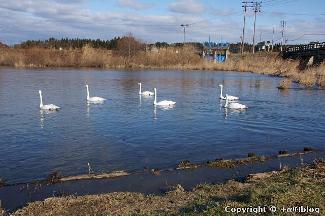 swan1112b_eip.jpg