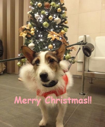 クリスマスだよ!