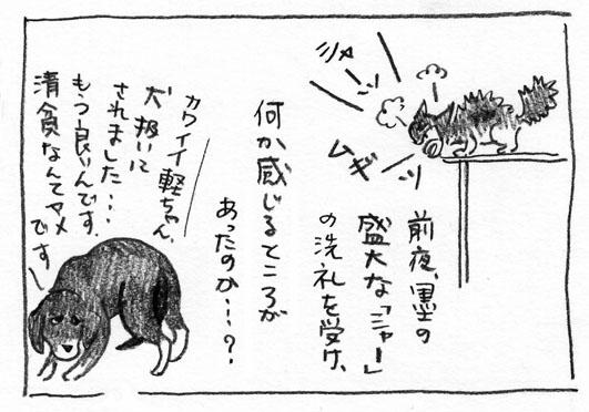 5_シャー洗礼