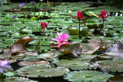 花鳥園 水芭蕉