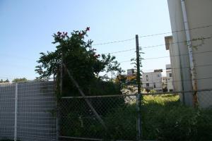 101001 戸政住宅跡
