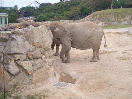 101107 象