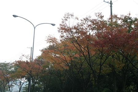 101112 街路樹