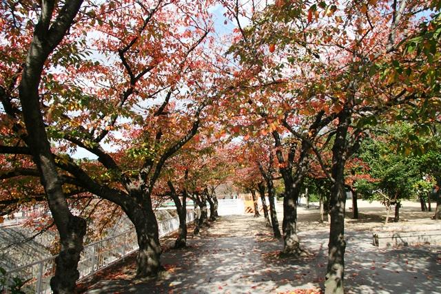 101116 妙法寺公園1