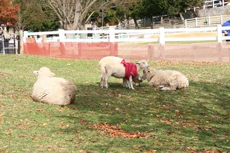 101123 羊親子