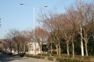101206 街路樹