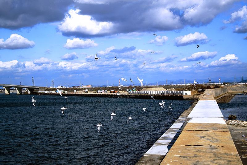 一色漁港と海鳥