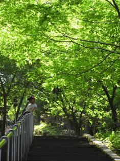 日本一の石段6
