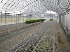 [写真]定植作業が終わり、さびしくなった育苗ハウス内の様子